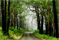 forest road with fog